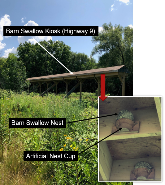 A barn swallow kiosk shows a barn swallow nest and an artifical nest cup